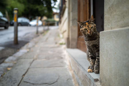 A cat on streets of Florence