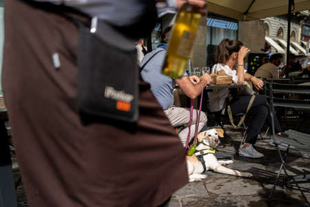 A dog watching a waiter in Florence