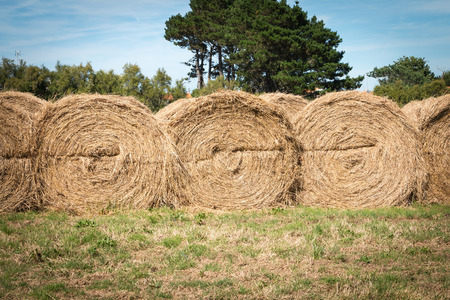 haystack: haystack aligned in a field after the grass was cut Stock Photo