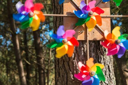 pinwheel: pinwheel toy hanging from a tree in forest