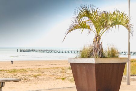 Palm tree in pot on the seafront with a pontoon in the background