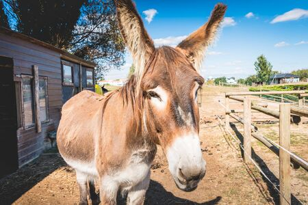 domain: brown and white donkey sleeps in a meadow with a wooden hut Stock Photo
