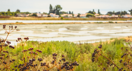 salinity: Traditional salt marsh of Noirmoutier, France during the salt harvest