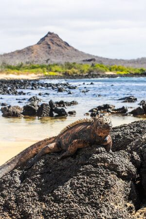 The Galapagos Islands is a volcanic archipelago in the Pacific Ocean Banco de Imagens