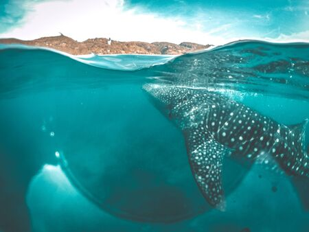 Whale shark watching off the scenic coast of Oslob, Cebu, Philippines