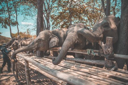 Elephant Sanctuary bathing in Isaan in Thailand