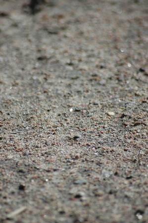 Sandy soil: suelo arenoso