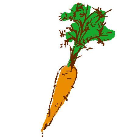 Vegetable carrot