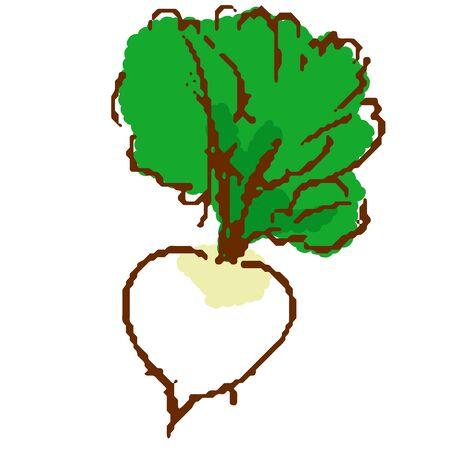 Vegetable Turnips