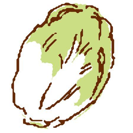 Vegetables cabbage Illustration