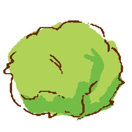 Vegetables Lettuce