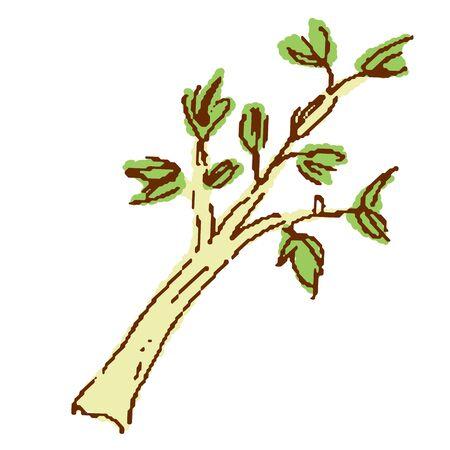 Vegetables Celery Illustration