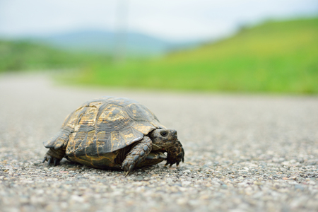Turtle walking on the way, green grass back