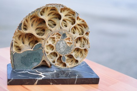 fossilized: Ammonite is a sectional texture of ancient fossilized mollusk Stock Photo