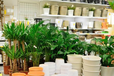 ROSTOV-ON-DON, RUSLAND - DECEMBER 2016: IKEA berging, kantoorruimte van bloemen en planten Redactioneel