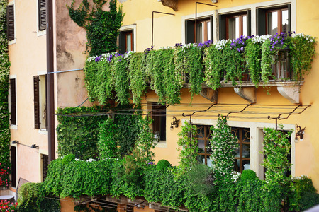 Beautiful balconies of old house decorated with flowers in pots, Verona, Italy. Verona is a popular tourist destination of Europe. Stock Photo