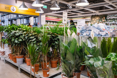 ST. PETERSBURG, RUSSIA - MARCH, 2019: Interior of elegant IKEA furniture store with live plants for the house.