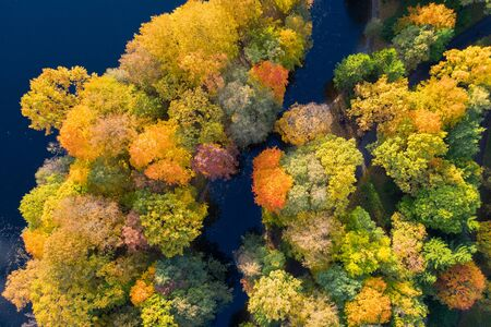 Aerial top down view of autumn forest with green and yellow trees. Mixed deciduous and coniferous forest.