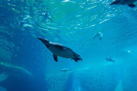 penguins underwater in the aquarium, blue water