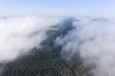 Aerial view of pine and fir-tree forest in mist early morning. Mysterious cloudy and foggy weather. Russian nature. Drone flies in clouds above.