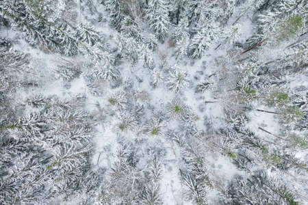 Aerial view at the winter forest. Pine trees as a background. Winter landscape from air. Natural forest background. Forest background from drone
