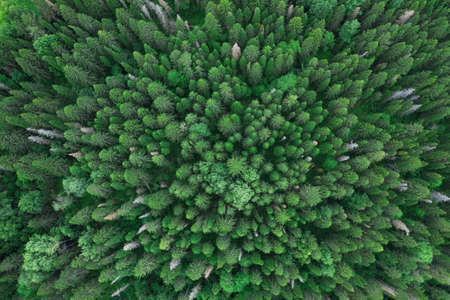 Aerial top view of summer green trees in forest in rural Russia, Ural near Perm. Drone photography Imagens