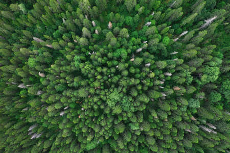 Aerial top view of summer green trees in forest in Russia. Drone photography Imagens