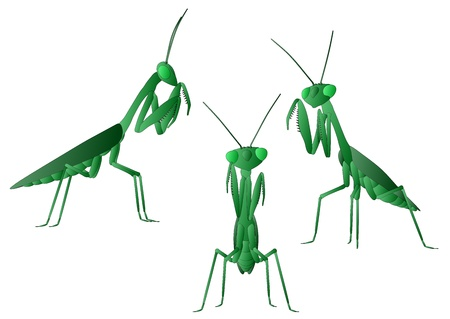 Praying Mantis  Иллюстрация