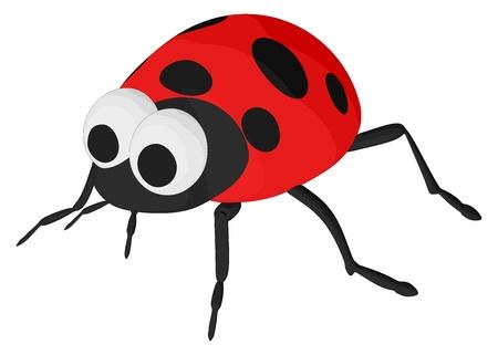 lady bug: Lady Bug Illustration