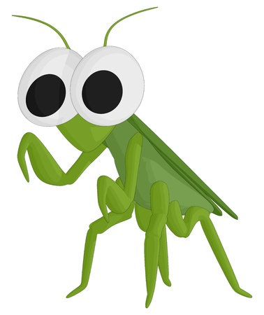 Praying Mantis  Stock Vector - 17070775