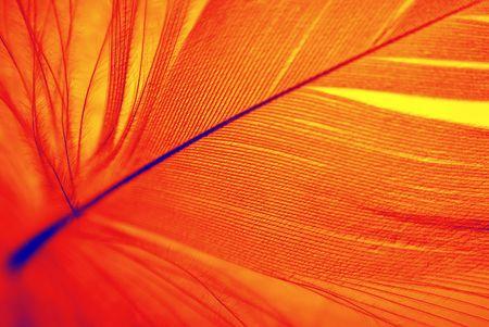 love bird: Feather of Phoenix, mythical, sacred firebird - symbolical in Egiptian mythology and Christian religion. Stock Photo