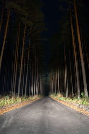 dirt road: Road in the forest by night. Stock Photo
