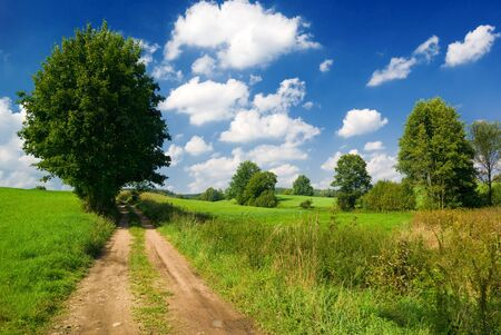 mazury: Saturated summer landscape - Lonely tree near country road. Mazury, Poland. Stock Photo