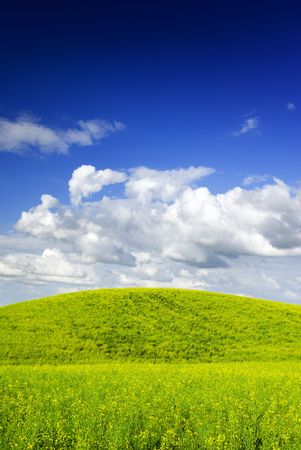 cropland: Summer landscape - saturated view of meadow. Europe, Poland.