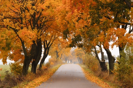 Autumn - road with colorful, vibrant maple trees  Fall in Poland