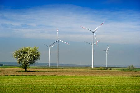 windfarm: Parque e�lico y el �rbol verde en el campo y el cielo azul