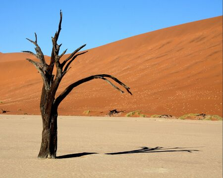 sossusvlei: A dead Acacia tree in Deadvlei, Sossusvlei, Namibia. Stock Photo