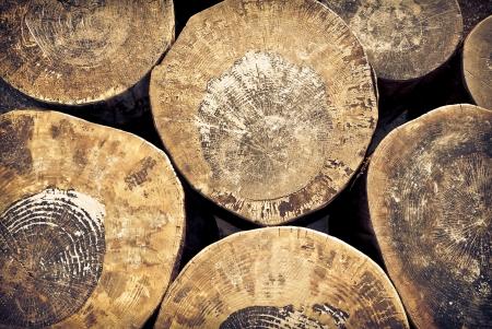 cut tree trunks background Stock Photo - 15507278