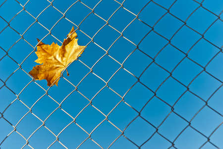 Yellow autumn fall leaf caught in the wire mesh Stock Photo - 17011091