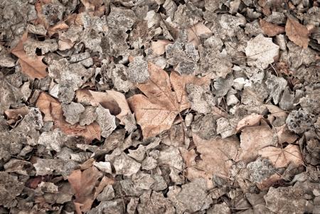 dead leaves: Las hojas muertas para los fondos y texturas