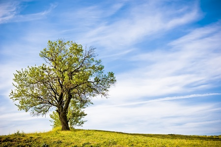 Green nature landscape with a tree photo
