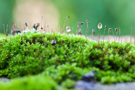 Drops of water on the moss