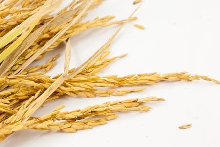 de arroz en el fondo blanco