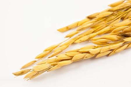arroz chino: arroz en el fondo blanco Foto de archivo