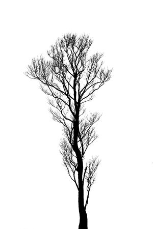 plats: tree vector on white background