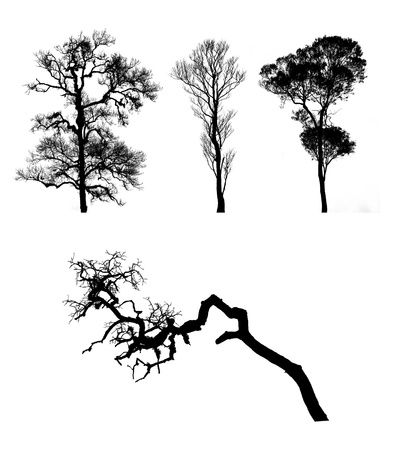 tree vector on white background