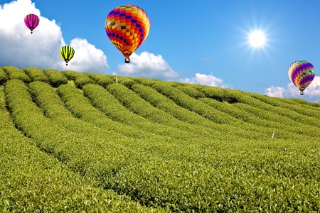 balloon in Green tea farm with blue sky background photo