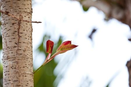 live again: Stem of the seedlings grown