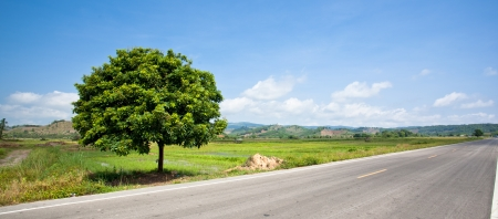trees inside Empty countryside road Stock Photo