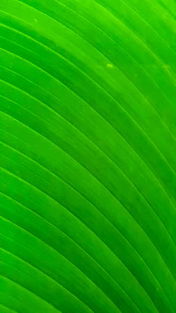 a green natural  tripped  background